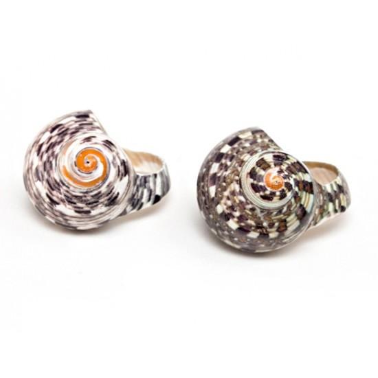 Кольцо-Ракушка Snail Natural